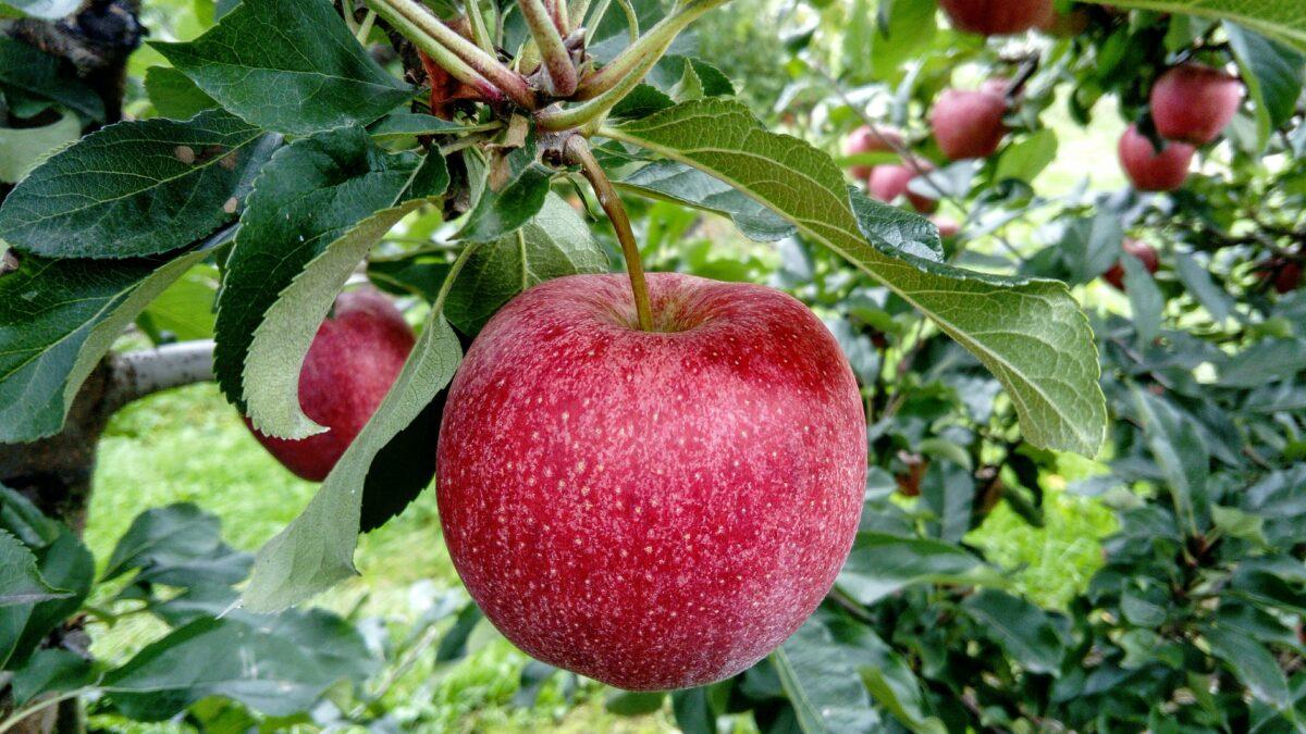 Voedselbossen en Agroforestry