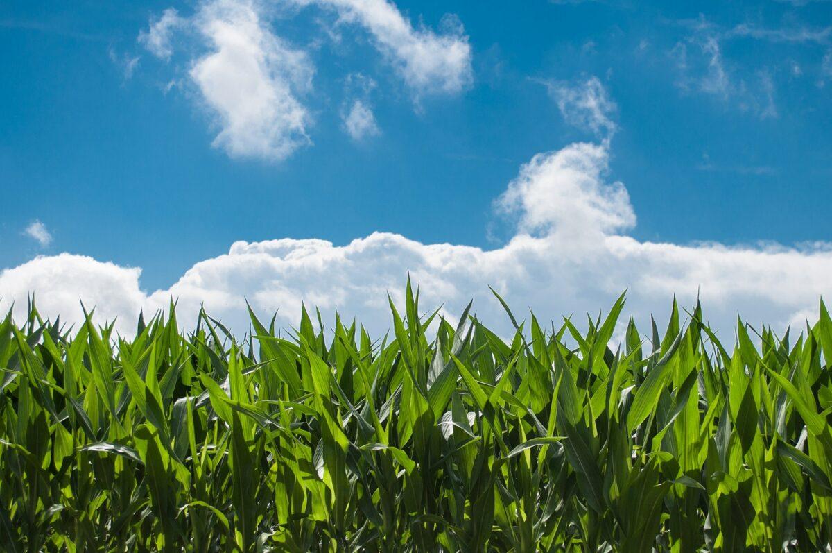 81 procent van akkerbouwers in Wieringermeer wil meer doen aan natuurinclusieve landbouw