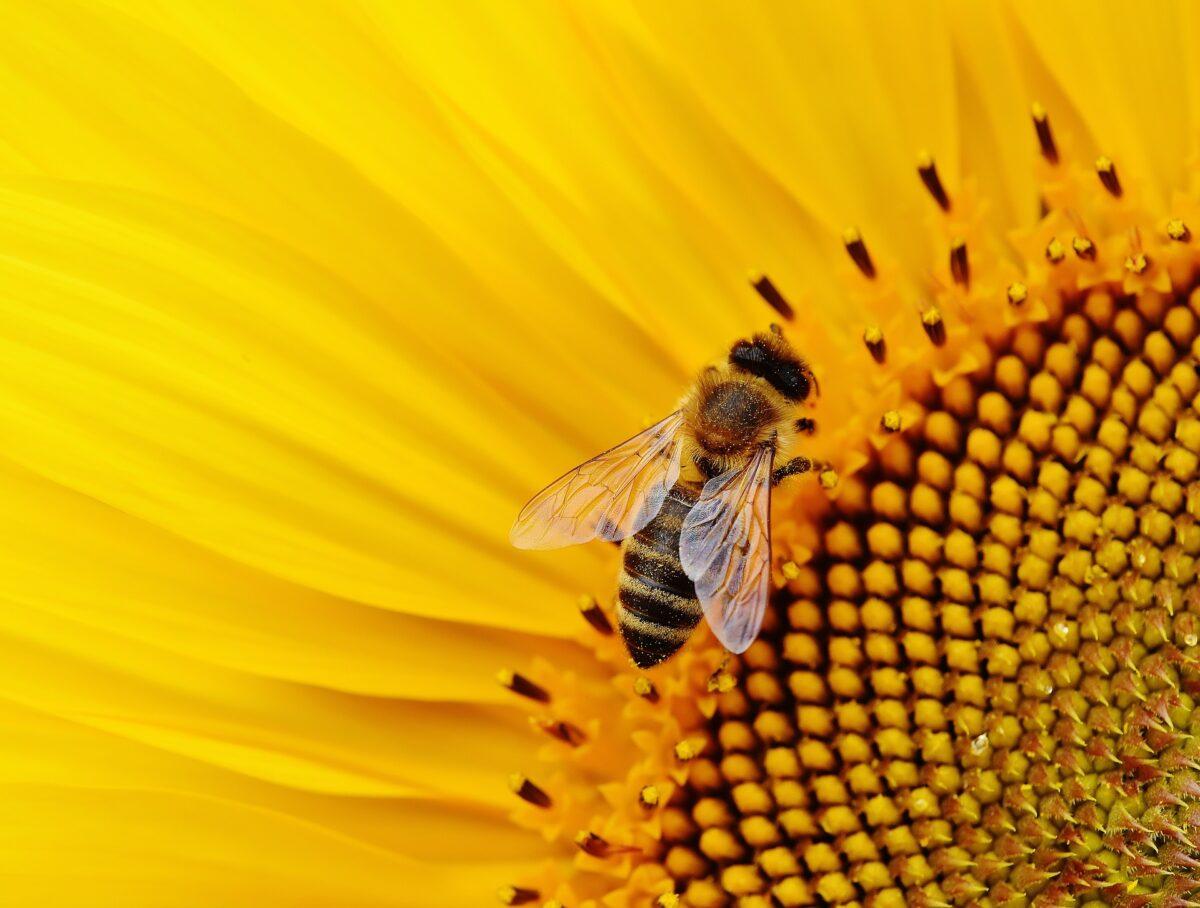 Landelijke Bijenwerkdag op 15 en 16 maart 2019